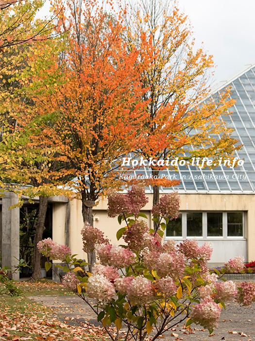 旭川市内の公園の紅葉