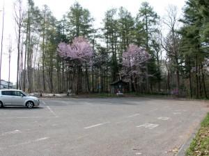 外国樹見本林駐車場