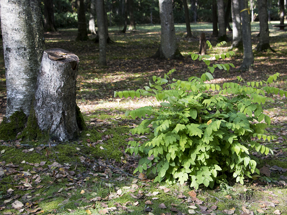 公園の小木