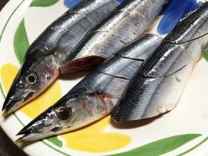 秋刀魚(サンマ)の季節がきた