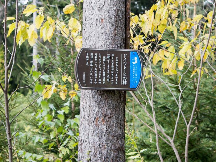 外国樹種見本林の「氷点」の案内板