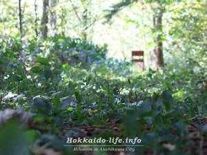 外国樹種見本林(がいこくじゅしゅみほんりん)