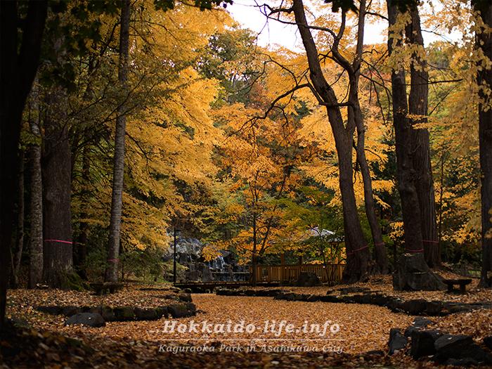 公園の滝の前の池の紅葉