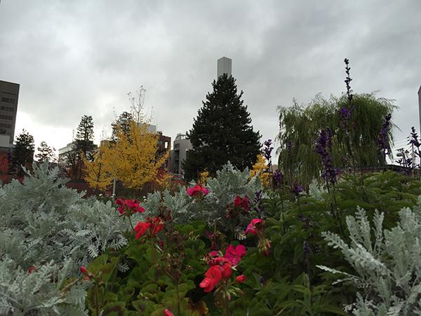 旭川市役所前の花壇