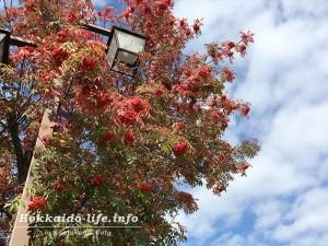 秋のナナカマド