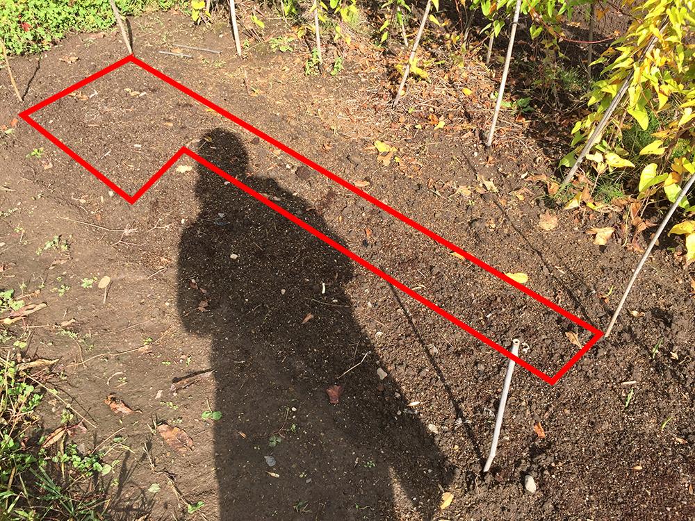 植え付け直後のニンニク畑(2015年9月30日)