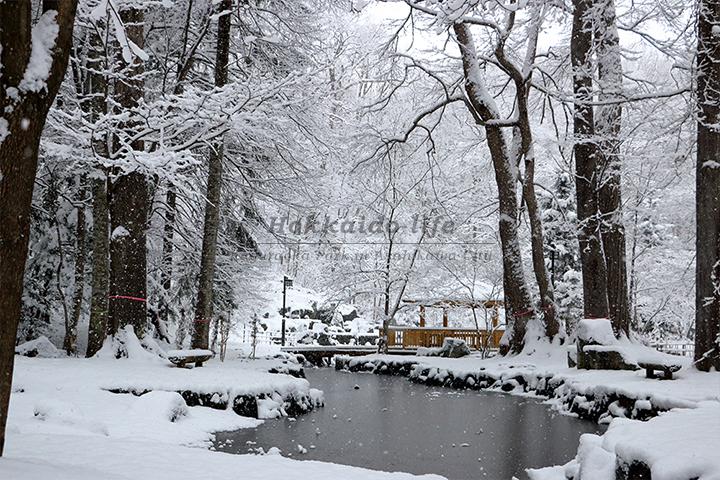 雪の公園の池(2015年11月22日撮影)