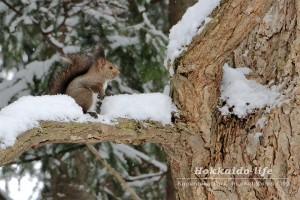 雪の公園とエゾリス