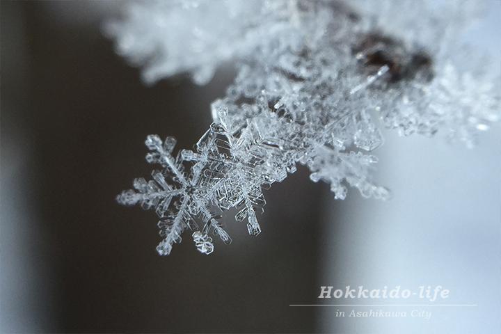 庭の雪の結晶(北海道旭川市、2015年11月26日撮影)