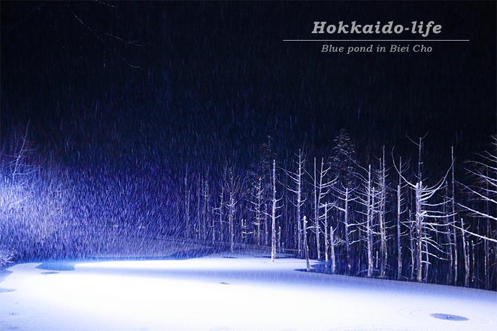 美瑛町の青い池/ライトアップ(11月22日撮影)