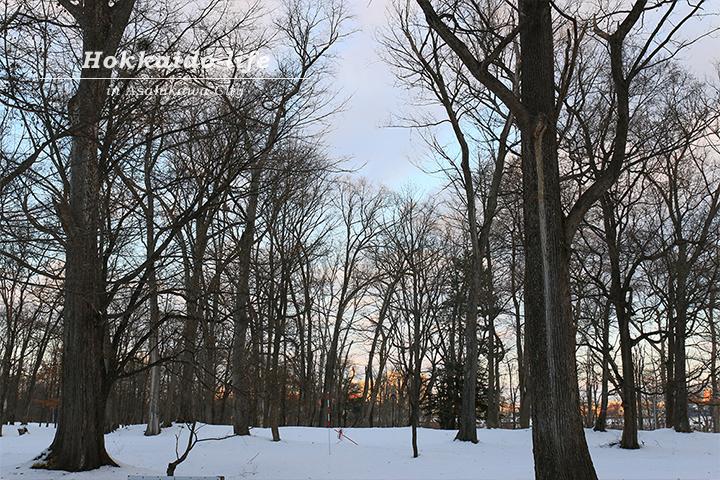 夕焼けに染まり始めた街を公園の林から撮影