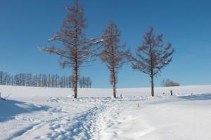 冬の美瑛のマイルドセブンの丘、撮影ポイントへの道