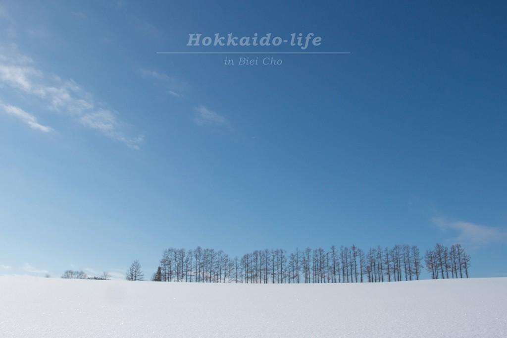 冬の晴れ間の美瑛のマイルドセブンの丘