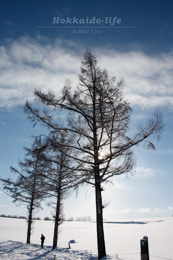 マイルドセブンの丘エリアにある木