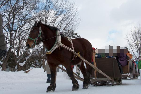 旭川冬まつり2016馬そり搭乗体験