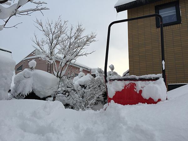 雪が積もった裏庭