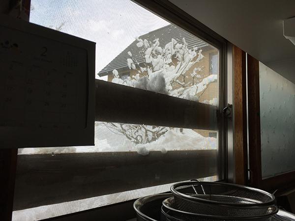 除雪後の裏庭(屋内から)