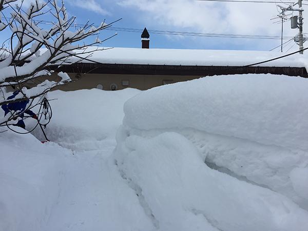 2月下旬の裏庭の雪の状況