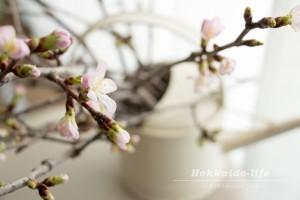 桜が咲いた、そのわけは?