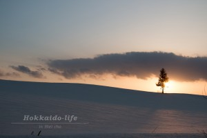 Orangish snow field and a tree~夕日に染まる雪原と一本の木~