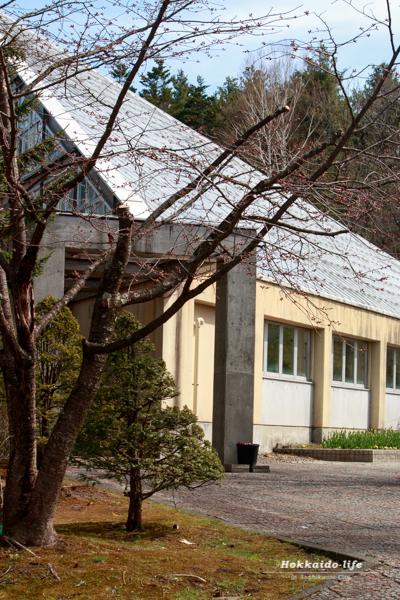 神楽岡公園 緑の相談所と桜