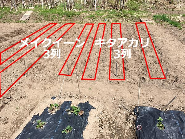2016年の芋植えマップ