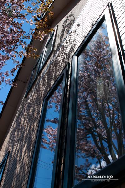 窓に映った青空と桜