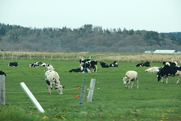 オロロンライン周辺の牧場