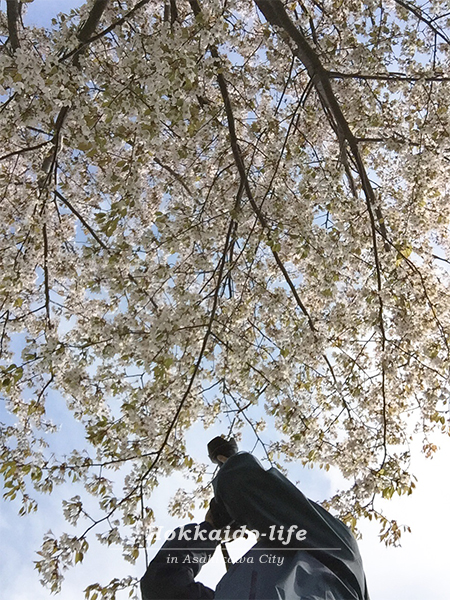 セルフポートレート、桜の撮影