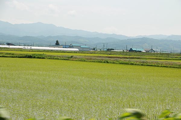 初夏の北海道の畑