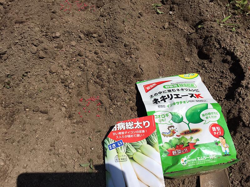 秋大根の種と根に付く虫除け剤