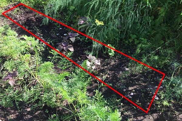 白菜収穫後の畑