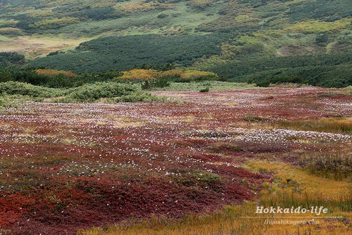 旭岳の早秋の紅葉