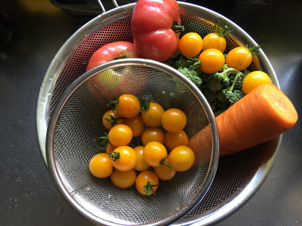 トマトはたくさん収穫