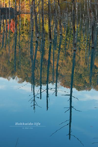 紅葉と青い池のリフレクション