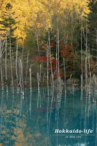 Blue pond with autumn leaves~青い池と黄と赤~