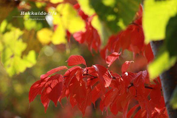 イオンモール旭川西で撮影した紅葉