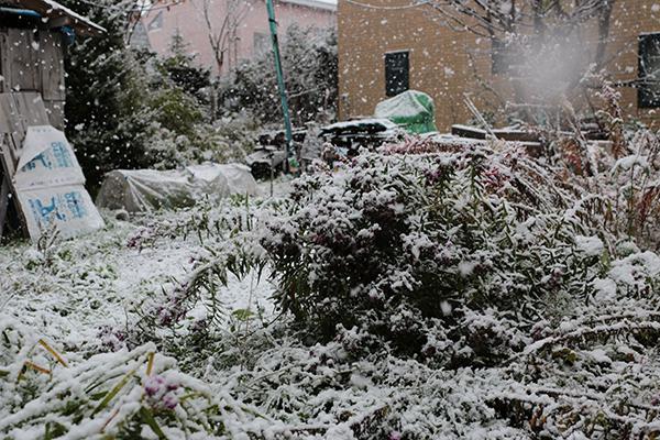 10月下旬の降雪する庭