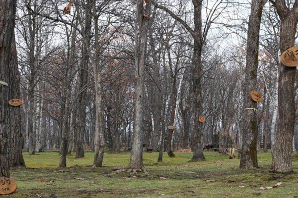積雪比較のための2015年11月20日の公園の写真