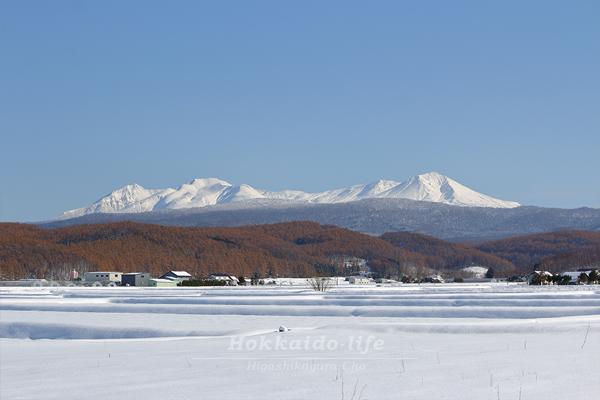 11月上旬に雪に覆われた畑と黒岳・旭岳