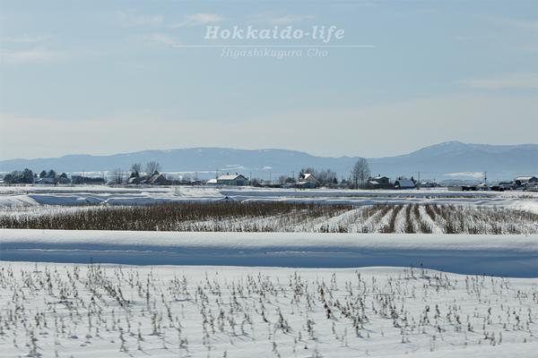 季節前倒しの大雪で雪が積もる大豆畑