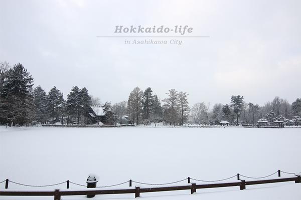 雪に覆われた常磐公園の千鳥ヶ池