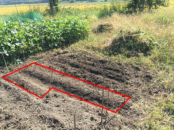 2017年夏収穫用にんにくの植え付けエリア