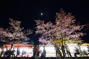 旭山公園の夜桜祭り2017