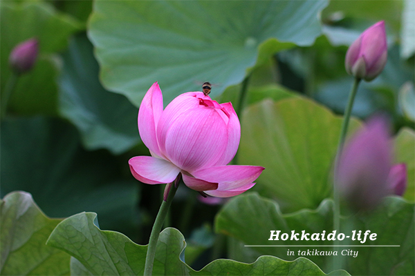 a bee into the lotus~魅惑の小部屋~