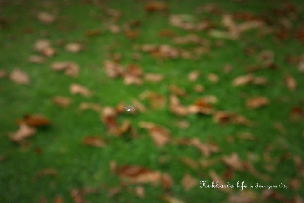 雪虫(ユキムシ)岩見沢市内で撮影