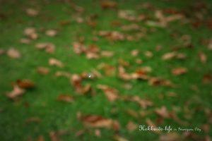 雪虫(ユキムシ)