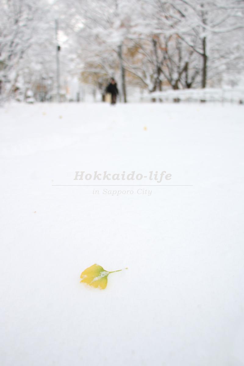 雪の札幌大通公園とイチョウ
