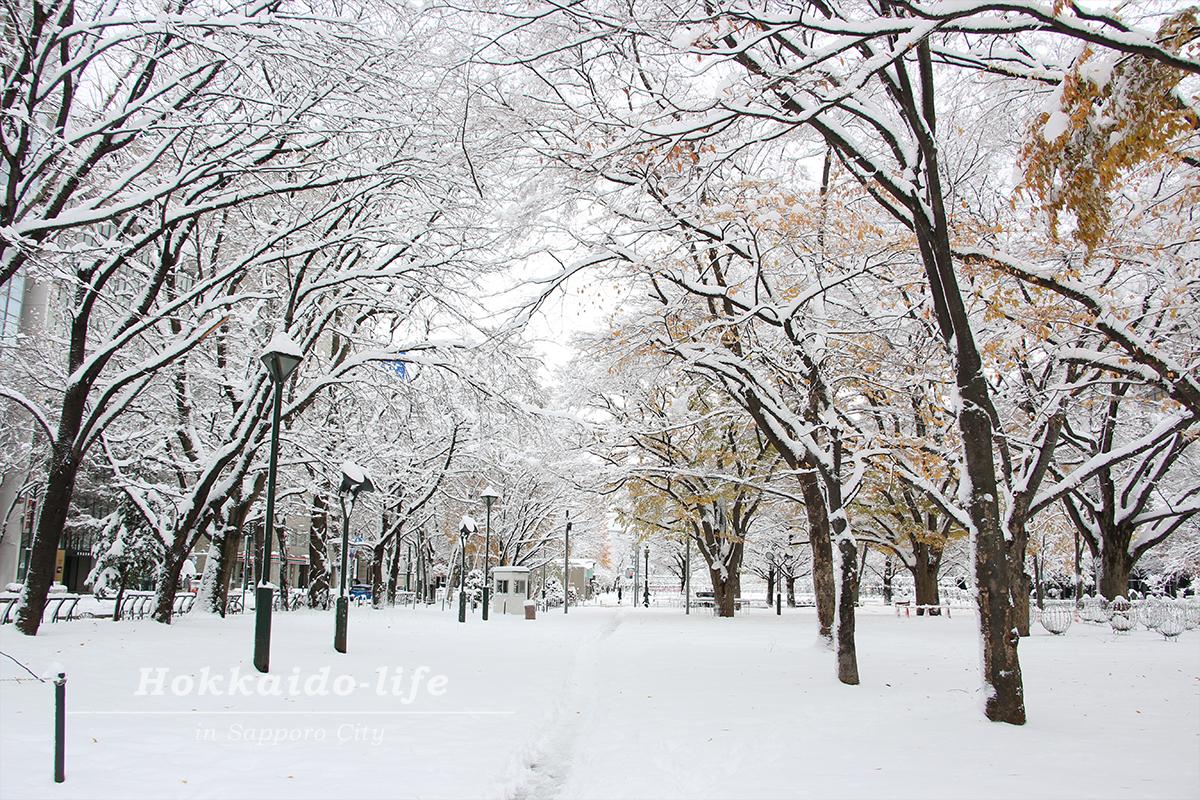 雪の札幌大通公園
