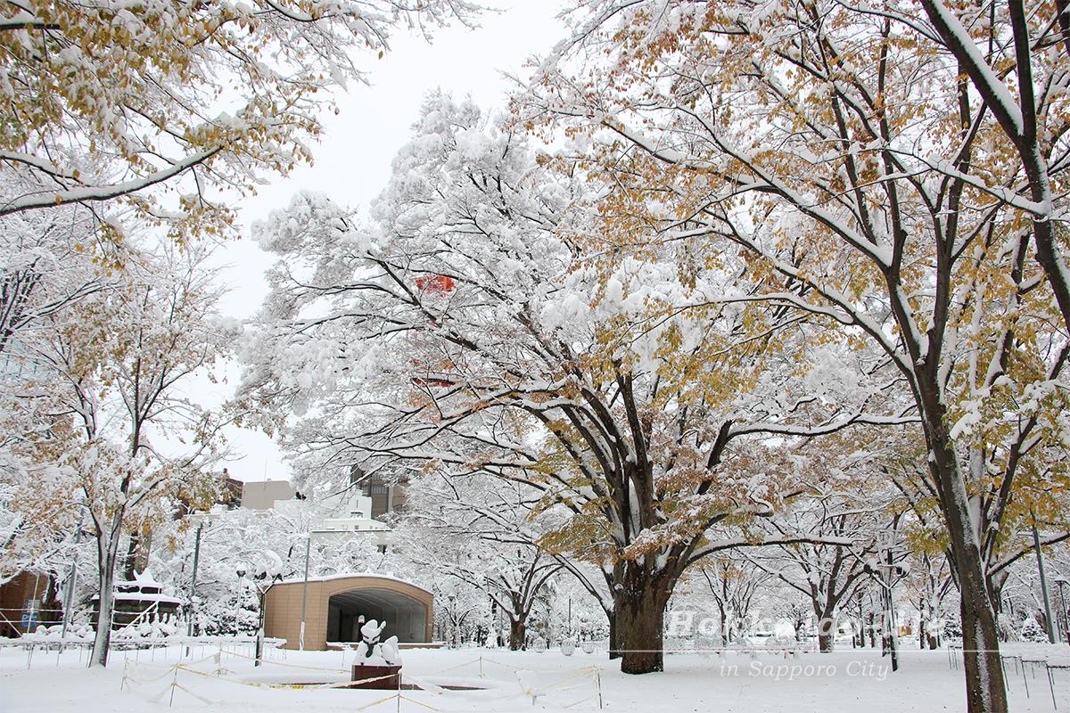 雪の札幌大通公園とイルミネーション準備